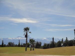 Palm Ourika